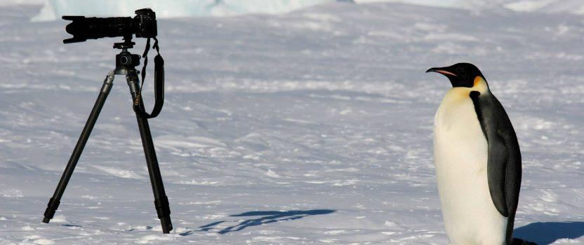 Antarctic Expedition Countdown