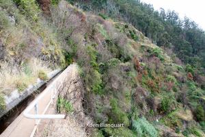 Madeira Levada Walks