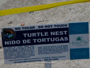 Turtle nest indication on the beach of Akumal