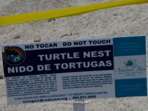 Turtle nest indication on the beach of Akumal