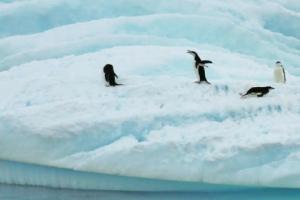 100 days till antarctica