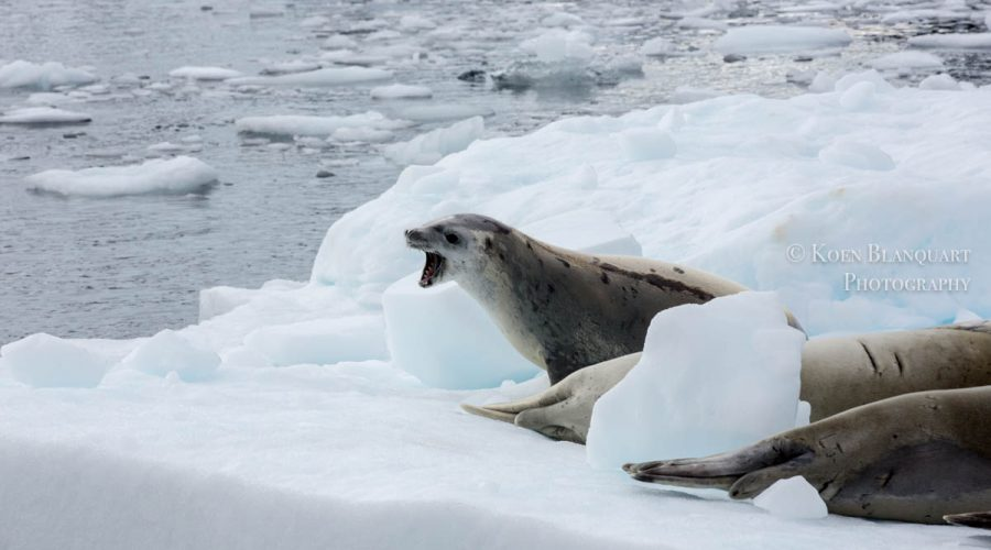 My first steps on Antarctica
