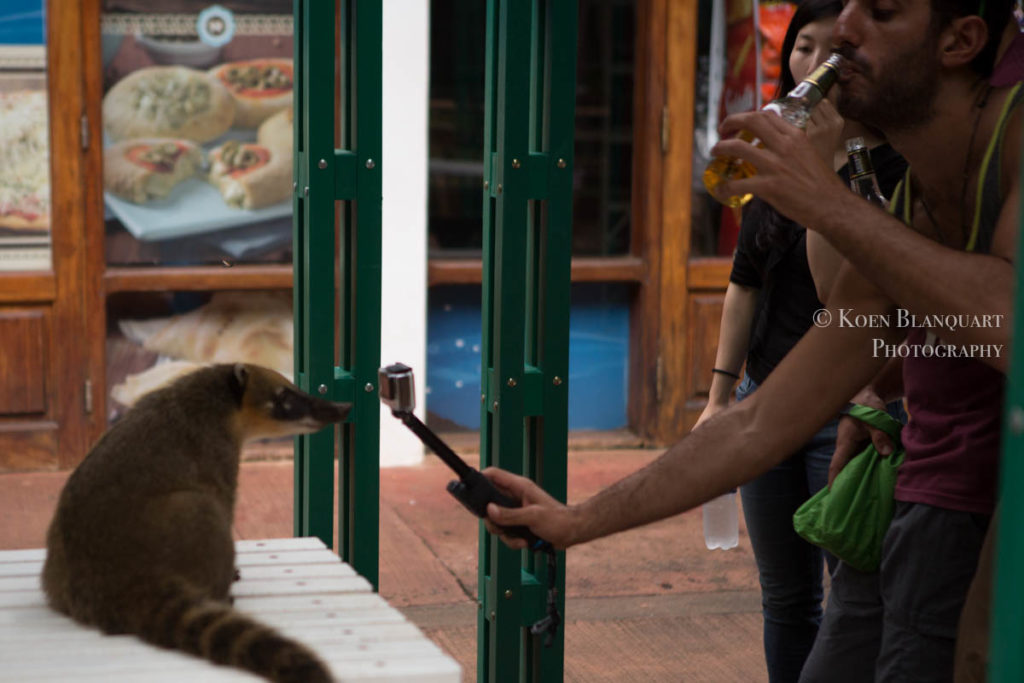 Ignorance is bliss, this tourist thinks when approaching the Cuati in Iguazu Falls