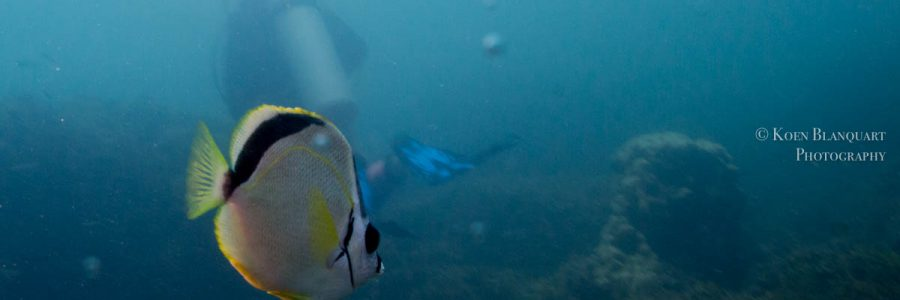 Divemaster in Costa Rica with Rich Coast Diving
