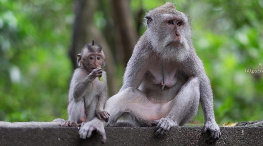 Sacred Monkey Forest Sanctuary – Ubud, Bali, Indonesia