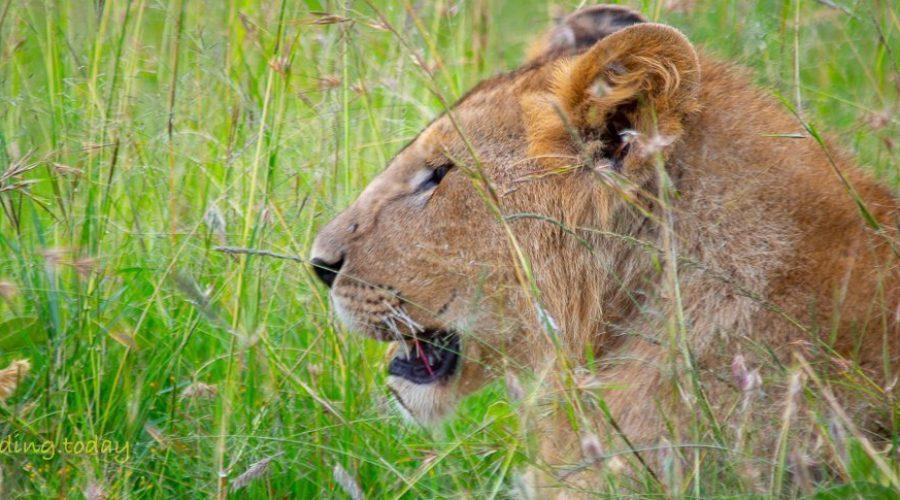 Safari in Kenya - Masai Mara - Boarding Today!